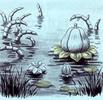 Illustration de Anémone géante