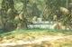 Forêt de Firone