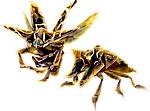 Illustration de Insecte des Ombres