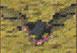 Saigneur/Chauve-souris